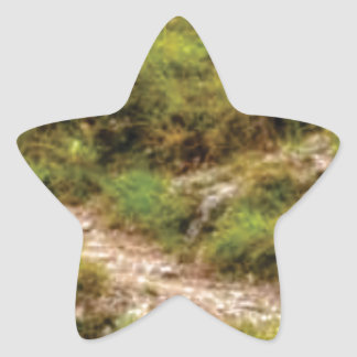 Sticker Étoile chemin herbeux