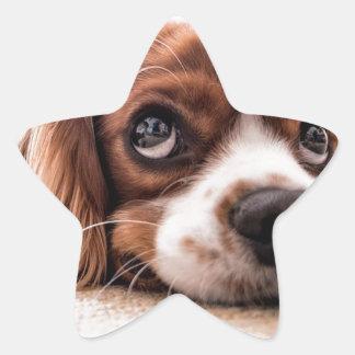 Sticker Étoile Chien canin triste