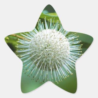 Sticker Étoile Fleur sauvage de Bush de bouton de l'Alabama