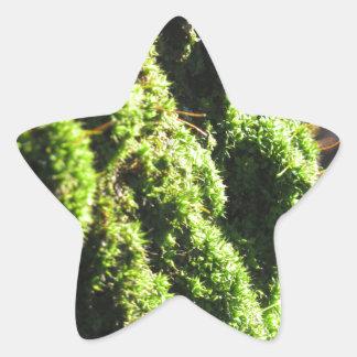 Sticker Étoile La mousse verte dans le détail de nature de la