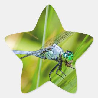 Sticker Étoile Libellule bleue sur une lame