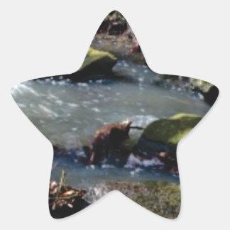 Sticker Étoile mousse dans The Creek