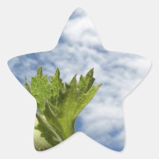 Sticker Étoile Noisette verte fraîche simple contre le ciel bleu