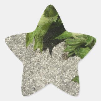 Sticker Étoile Noisettes vertes fraîches sur le plancher