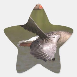 Sticker Étoile Oies canadiennes