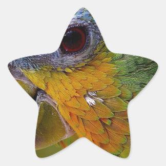 Sticker Étoile Oiseau exotique de vert d'oiseau d'animaux