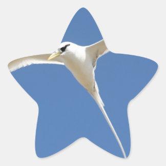 Sticker Étoile Oiseau Paille en Queue Ile Maurice