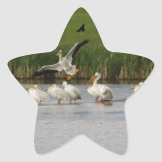 Sticker Étoile Pélicans