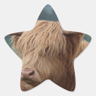Sticker Étoile portrait des bétail des montagnes