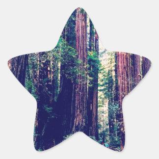 Sticker Étoile Séquoias de Californie
