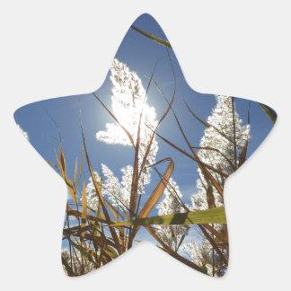 Sticker Étoile Thème de lumière du soleil d'éblouissement