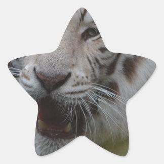 Sticker Étoile Tigre blanc