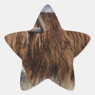 Sticker Étoile Yaks de Brown sur le vert et le champ d'herbe de