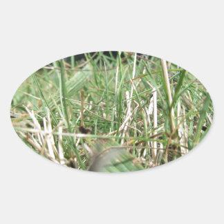 Sticker Ovale À l'intérieur de, l'herbe verte luxuriante pousse