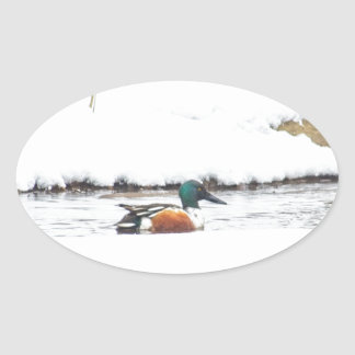 Sticker Ovale Canard d'hiver