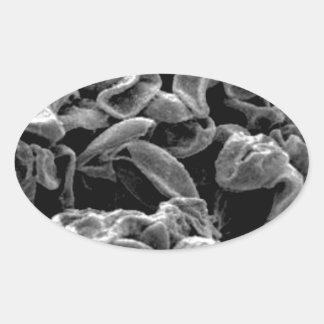 Sticker Ovale capture aplatie de cellules