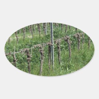 Sticker Ovale Champ nu de vignoble en hiver. La Toscane, Italie