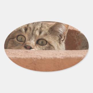 Sticker Ovale Chat sauvage curieux d'attention des plots