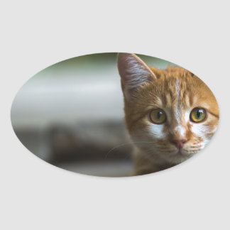 Sticker Ovale Chaton tigré orange