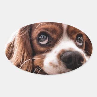 Sticker Ovale Chien canin triste