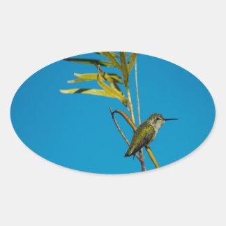Sticker Ovale Colibri femelle de rubis-gorge sur l'arbre