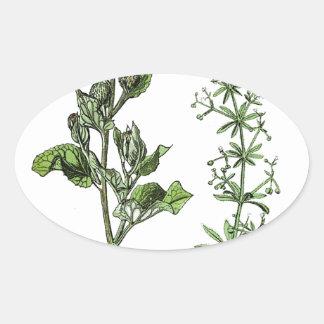 Sticker Ovale Copie botanique vintage de clématite
