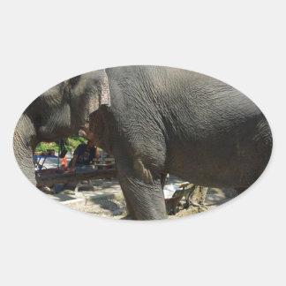 Sticker Ovale Éléphants en Thaïlande