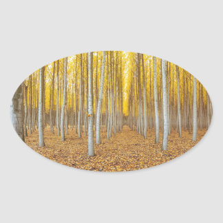Sticker Ovale Ferme d'arbre de peuplier dans Boardman Orégon