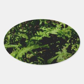 Sticker Ovale Fougères vertes