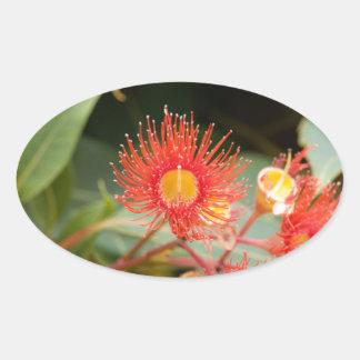 Sticker Ovale Gomme fleurissante rouge (ficifolia de Corymbia)