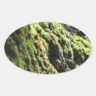 Sticker Ovale La mousse verte dans le détail de nature de la