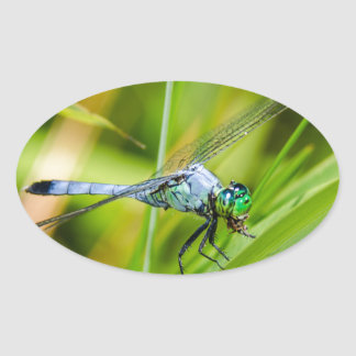 Sticker Ovale Libellule bleue sur une lame