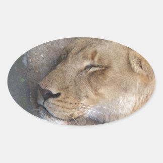 Sticker Ovale Lionne de sommeil
