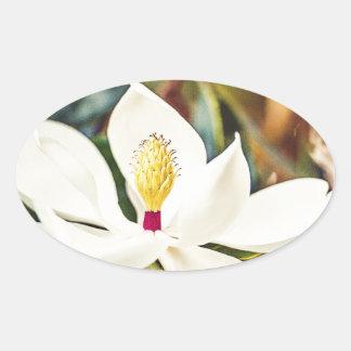 Sticker Ovale Magnolia magnifique du Mississippi