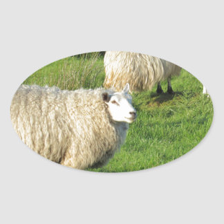 Sticker Ovale Moutons irlandais