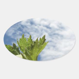 Sticker Ovale Noisette verte fraîche simple contre le ciel bleu