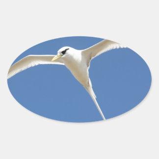 Sticker Ovale Oiseau Paille en Queue Ile Maurice