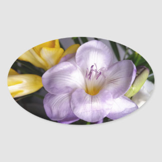 Sticker Ovale ouvrez le freesia violet