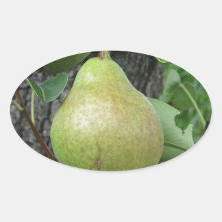 Sticker Ovale Poires vertes accrochant sur un poirier croissant