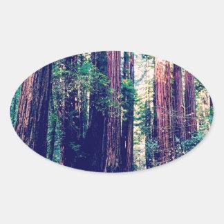 Sticker Ovale Séquoias de Californie