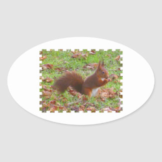 Sticker Ovale Squirrel - Ecureuil