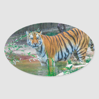 Sticker Ovale Tigre