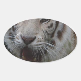 Sticker Ovale Tigre blanc