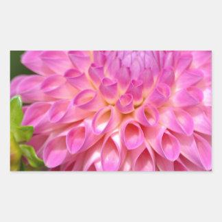 Sticker Rectangulaire Affiche rose abondante de dahlia et de bourgeon