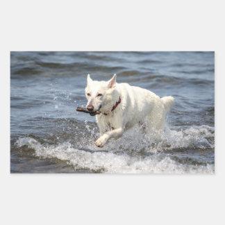 Sticker Rectangulaire Allemand blanc Shepard sur le lac George