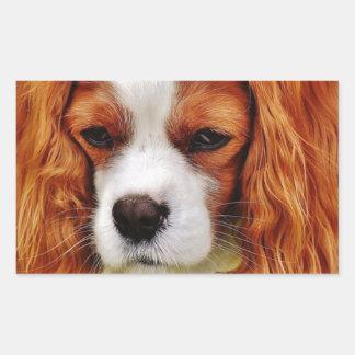 Sticker Rectangulaire Animal de compagnie drôle cavalier d'épagneul du