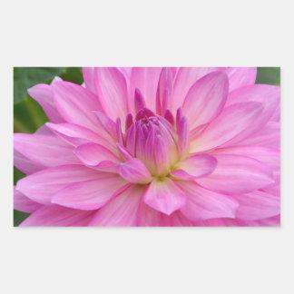 Sticker Rectangulaire Beauté rose de dahlia