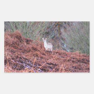 Sticker Rectangulaire Cerfs communs sur une colline