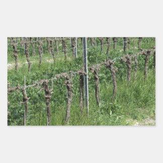 Sticker Rectangulaire Champ nu de vignoble en hiver. La Toscane, Italie