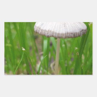 Sticker Rectangulaire champignon de bébé